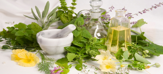 Ημερίδα ΕΟΦ για τα Αρωματικά και Φαρμακευτικά φυτά!