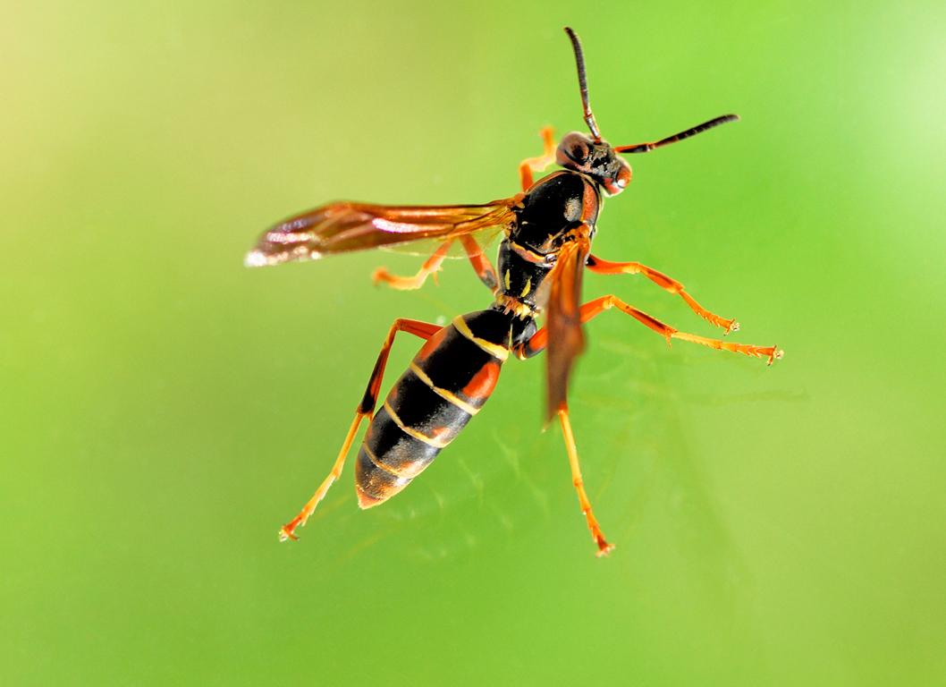 Τι να κάνω αν με τσιμπήσει σφήκα ή μέλισσα!