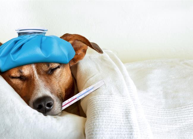 Δείτε πώς να ρίξετε τον πυρετό χωρίς φάρμακα