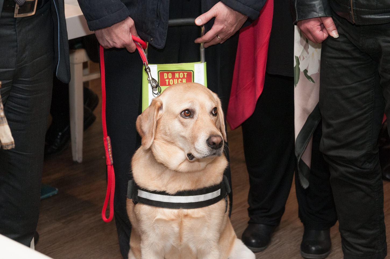 Bayer: Δωρεά αντιπαρασιτικής προστασίας στους «Σκύλους Οδηγούς Ελλάδος»