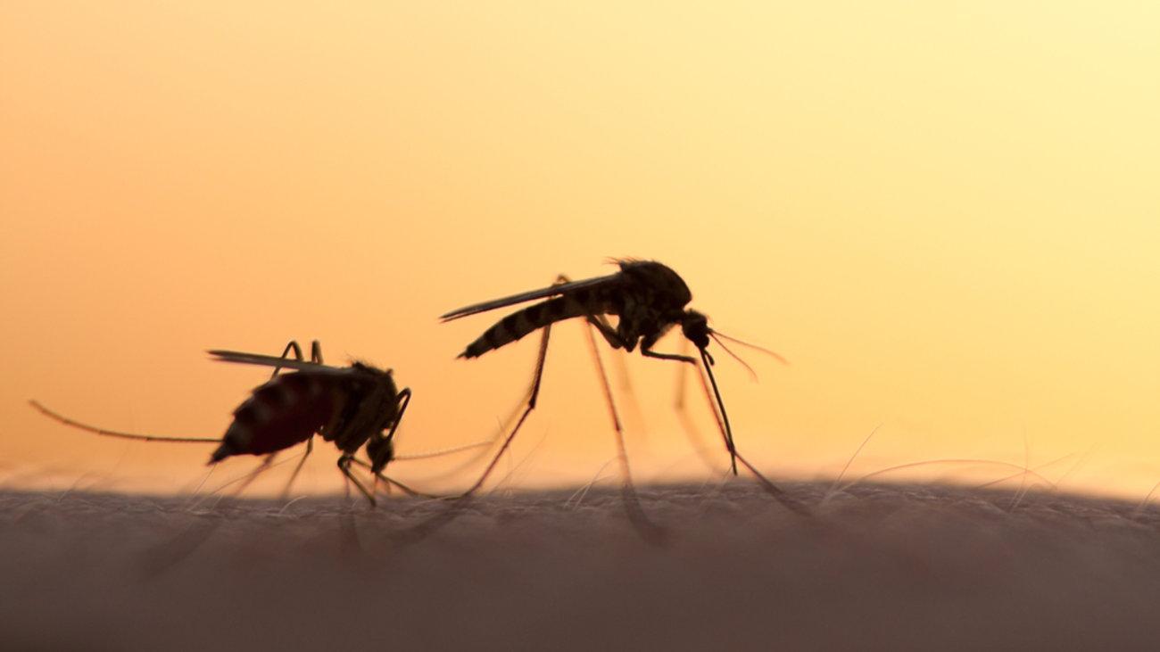 """ΚΕΕΛΠΝΟ: Σύσκεψη """"κατόπιν εορτής"""" για τα μολυσμένα κουνούπια! Τι αποφασίστηκε"""