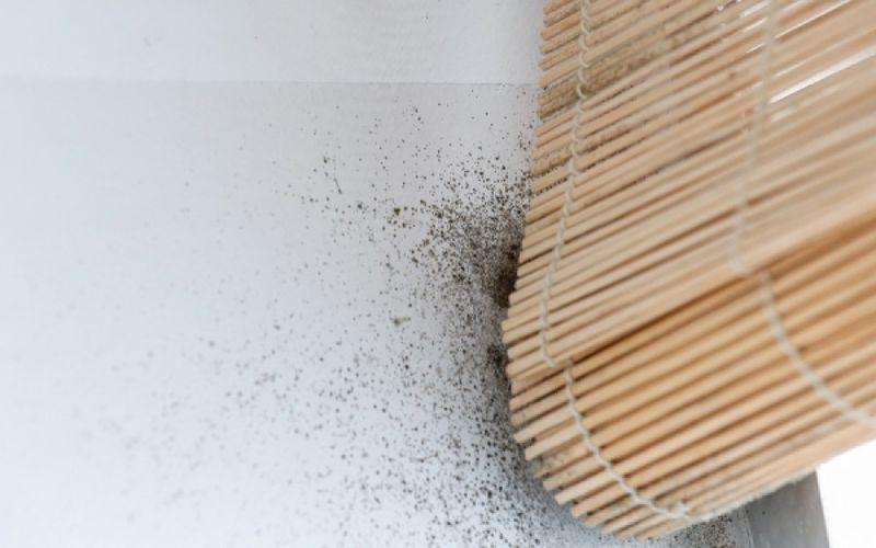 Μούχλα στο σπίτι: Ποιους κινδύνους κρύβει;