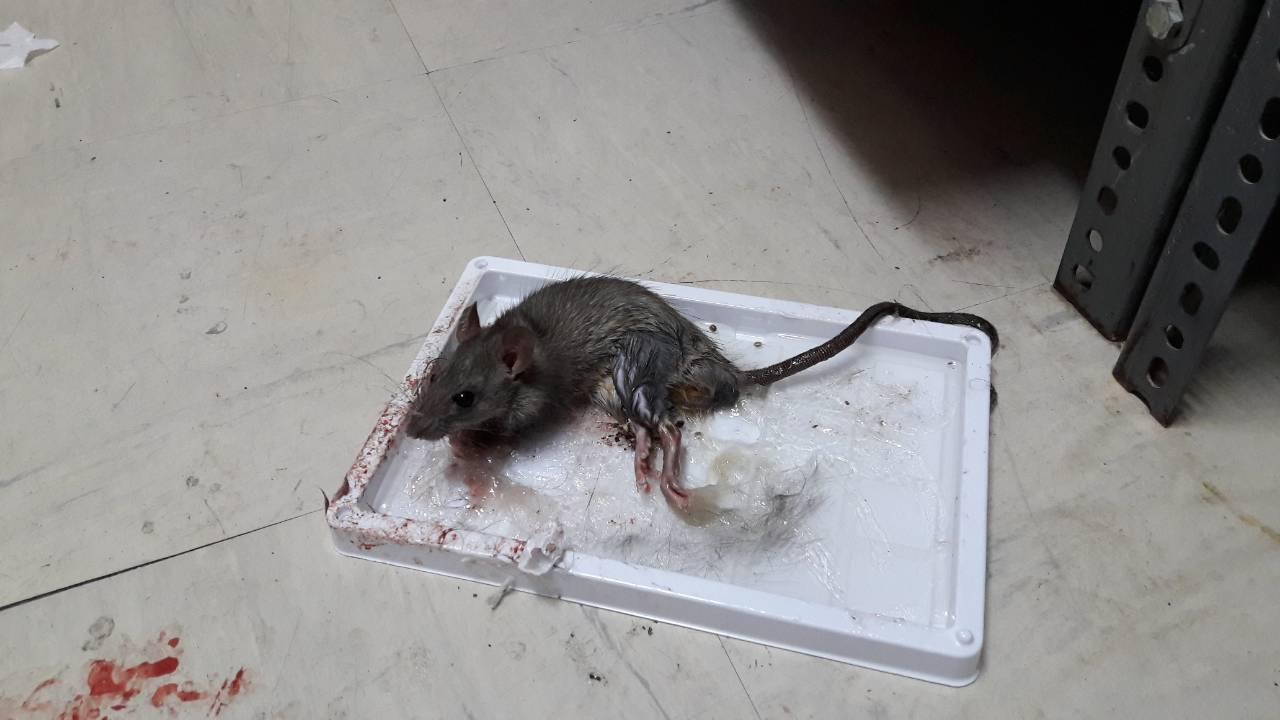 Ανατριχιαστική φωτό από το νοσοκομείο Κιλκίς! Αλωνίζουν τα ποντίκια