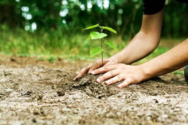 Η ELPEN ξανακάνει «πράσινο» το Νέο Βουτζά