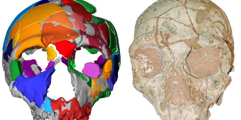 Στην Ελλάδα το αρχαιότερο δείγμα Homo Sapiens στην Ευρασία!