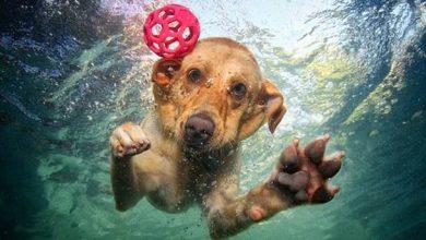 Τι να προσέχετε όταν πηγαίνετε με τον σκύλο στη θάλασσα
