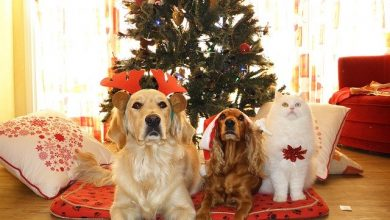 Photo of Ποιοι κίνδυνοι απειλούν το κατοικίδιό σας τα Χριστούγεννα;